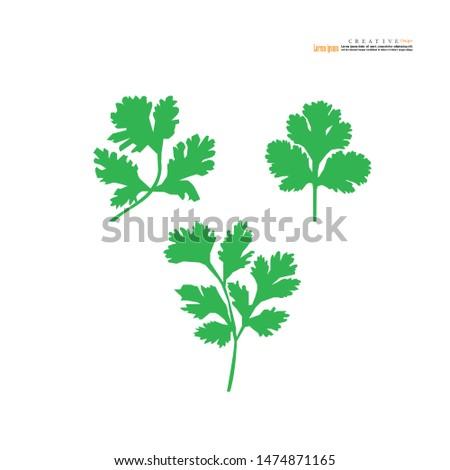 coriander or cilantro icon on white background. vector illustration. #1474871165
