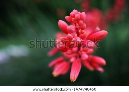 Beautiful Colorful Plant Macro Photo #1474940450