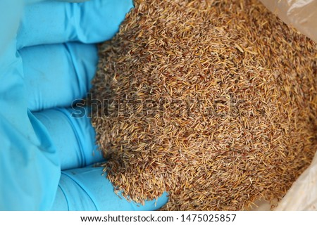 Lawn grass seeds ready for planting #1475025857