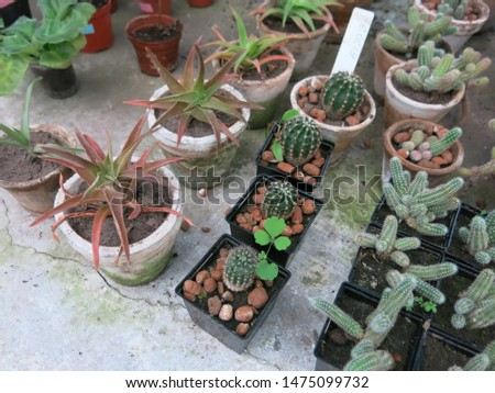 Cacti species on the shelf in the plants store #1475099732