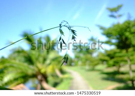 Summer flowers on the meadow. Wildflower meadow  flower meadow  wildflowers. Summer nature backgrounds #1475330519
