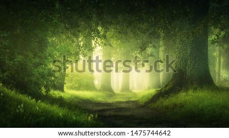 beautiful magic  forest in the sunny foggy view