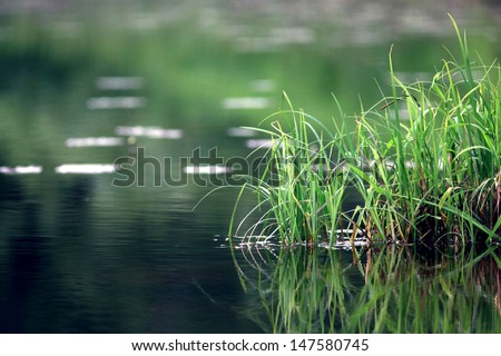 nature purity grass on the river bank #147580745