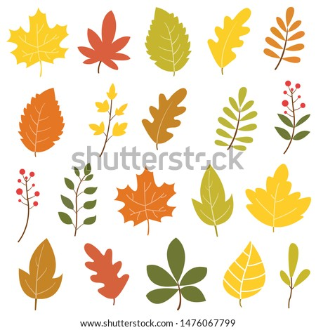 Set of colorful autumn leaves and berries. Isolated on white background. Simple design. Flat style vector illustration. #1476067799