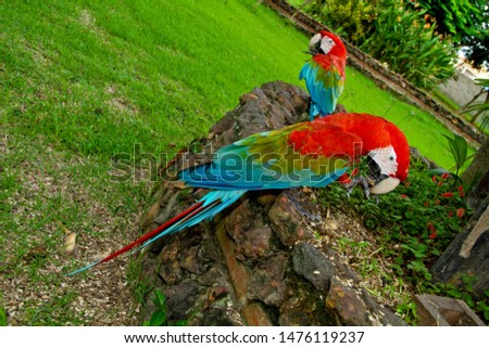 Red arara. colorful Macaw parrot #1476119237