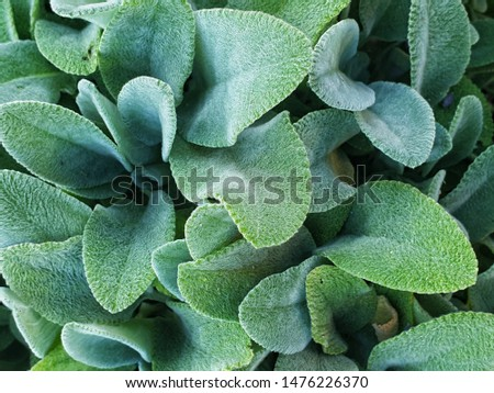 beautiful structural succulent leaves shot in macro mode #1476226370