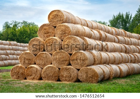 Hay bales. Hay bales are stacked in large stacks. Harvesting in agriculture. #1476512654