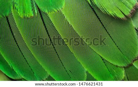 closeup shot of parrots feather or parakeet feather #1476621431