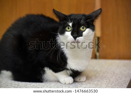 black and white cat with a crazy look #1476663530