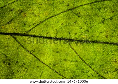 Background image of a leaf of a tree close up #1476710006