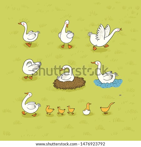 Set with Goose and ducks, nest and eggs. Farm animals.