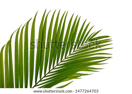 Textured leaves abstract green nature background tropical leaves coconut leaves Isolated on white background #1477264703