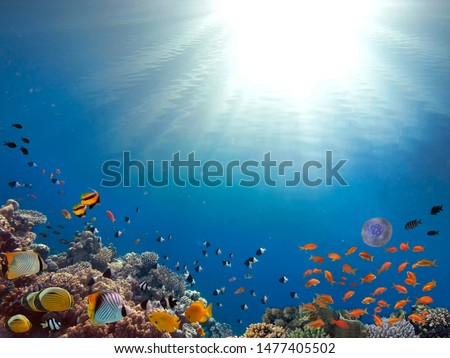 Sunbeams underwater corals on the seabed swimming fish in Sunlight. #1477405502