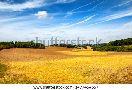 a field of Golden wheat under the blue sky #1477454657
