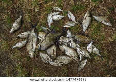 a lot of fish caught on the shore #1477476698