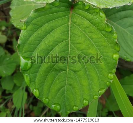 Leaf green leaf focus leaf best leaf  #1477519013