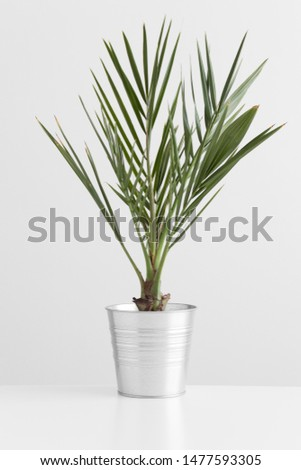 Palm tree in a pot on a white table. #1477593305
