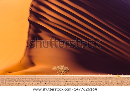 Dune 45, a 170m high dune made from red sand, Sossusvlei, Namib-Naukluft National Park, Namibia #1477626164