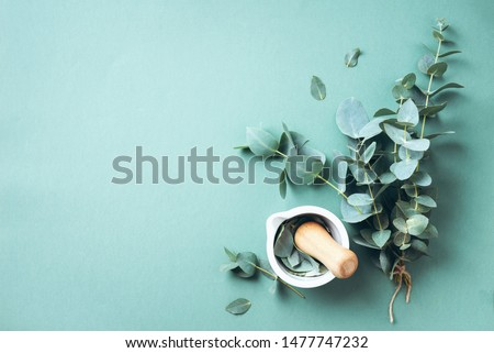 Eucalyptus leaves and white mortar, pestle. Ingredients for alternative medicine and natural cosmetics. Beauty, spa concept #1477747232