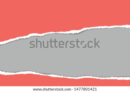 Ripped paper. Vector of ripped paper. The paper was ripped background. #1477801421