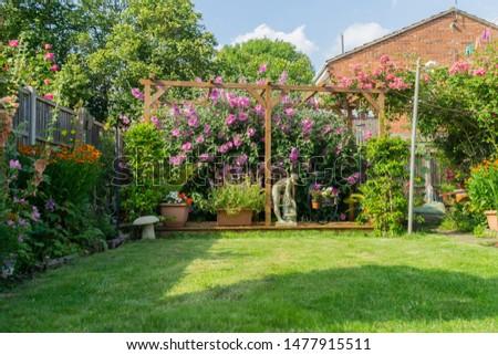 Flower in a garden outside in the summertime