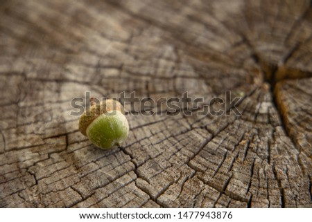 acorn on soft focus stump wood perspective surface, autumn seasonal concept picture with empty space for copy or text