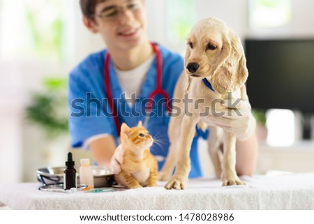 Vet examining dog and cat. Puppy and kitten at veterinarian doctor. Animal clinic. Pet check up and vaccination. Health care. #1478028986