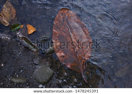 Wallpaper Leaves in the water #1478245391