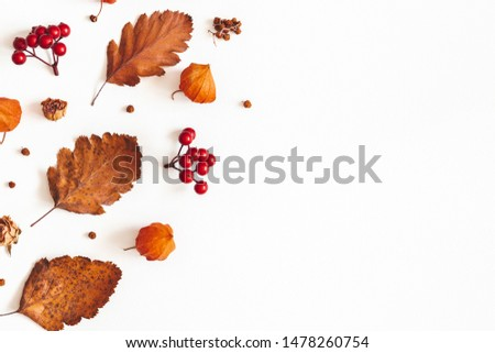 Autumn composition. Dried leaves, flowers, rowan berries on white background. Autumn, fall, thanksgiving day concept. Flat lay, top view, copy space #1478260754