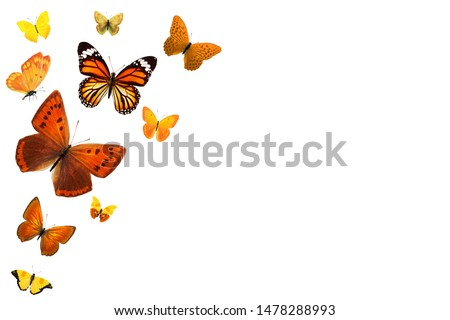 Set of flying butterflies isolated on a white background. flock of insects