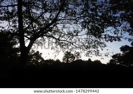 Tree silhouette, forest silhouette, landscape silhouette #1478299442