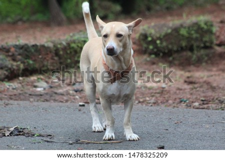 image of a cute dog #1478325209