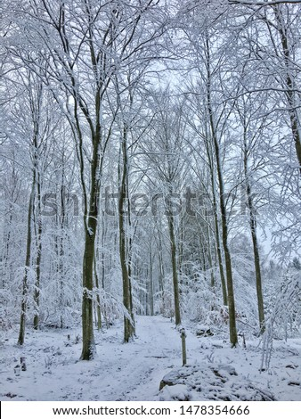 South sweden winter beech forest #1478354666