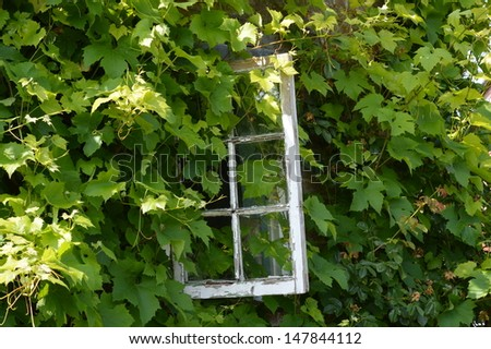 Window over run with a Vine #147844112