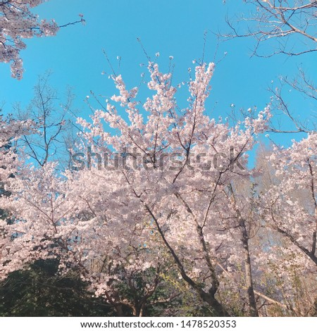 this picture was taken in spring. cherry blossoms are blooming to pink and sky is nice blue :) It makes me happy. Maybe you too. use your instagram, facebook, blog, etc.