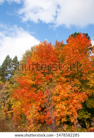 A wonderful time to fall, golden leaves, warm days #1478582285
