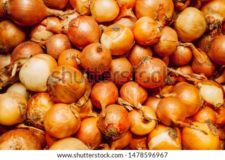 a lot of yellow onions. yellow onions close up. Onions big Golden on the counter market. Fresh onions. Golden onion background . vintage photo processing #1478596967
