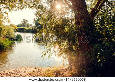 Overgrown water in the swamp. Swamp in the forestLake in the rays of the sunset #1478660039