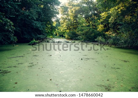 Overgrown water in the swamp. Swamp in the forest #1478660042