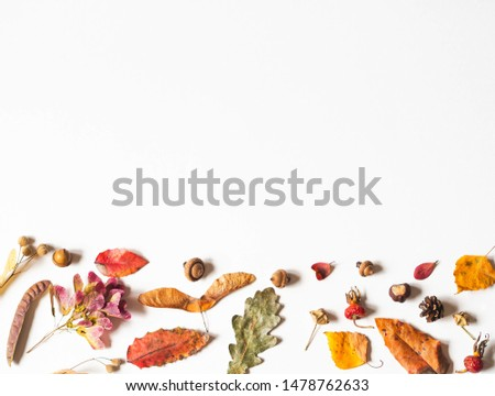 Acorns, seeds and leafs of wild trees isolated on white background and open space for text. Botany background. Top view  #1478762633