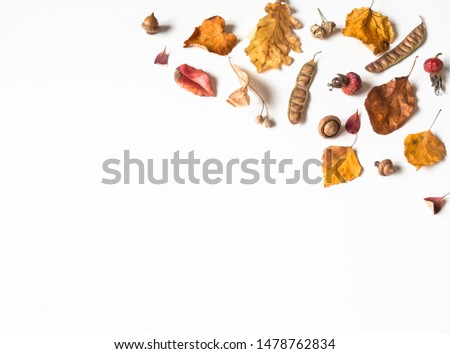 Acorns  and various seeds and leafs of wild trees isolated on white background and open space for text. Botany background. Top view  #1478762834