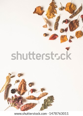 Acorns  and various seeds and leafs of wild trees isolated on white background and open space for text. Botany background. Top view  #1478763011