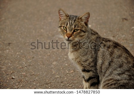 A cat or Domestic cat is a domestic animal, a mammal of the feline order predatory family. #1478827850