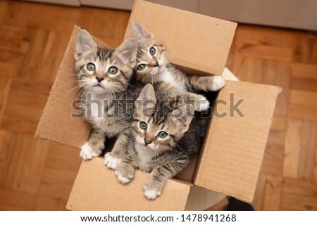 Brown tabby cat kittens in cardboard box #1478941268