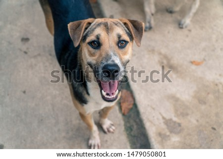 Abandoned at the stray dog shelter, dogs looking for a home look into the camera. #1479050801