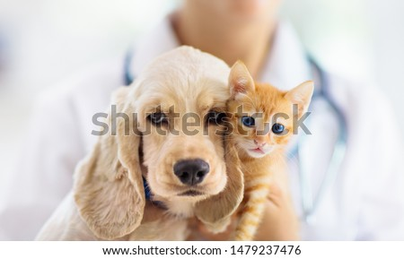 Vet examining dog and cat. Puppy and kitten at veterinarian doctor. Animal clinic. Pet check up and vaccination. Health care. #1479237476