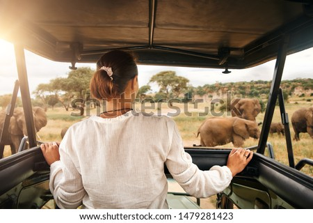 Woman tourist on a safari in Africa, traveling by car with an open roof in Kenya and Tanzania, watching elephants in the savannah. Tarangire National Park. #1479281423