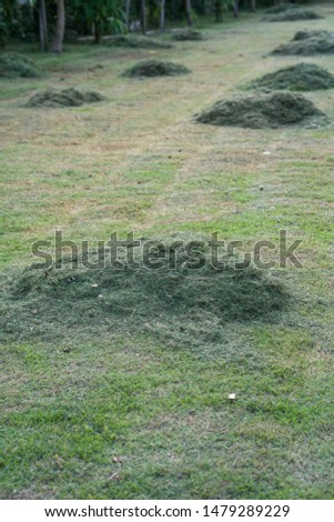 pile of freshly cut grass in park  #1479289229