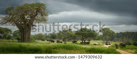 Panoramic view of the African savannah with group of wild elephants. Tarangire National Park,Tanzania.