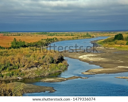River landscape. Northern reindeer in summer forest. The sky, green trees and a river with brown water #1479336074